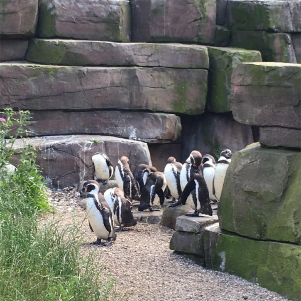 Bei Hagenbacks Tierpark